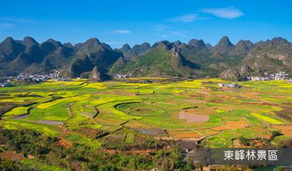 東峰林景區