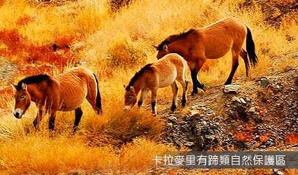 卡拉麥里有蹄類自然保護區