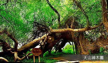天山神木園