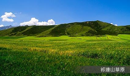 祁連山草原