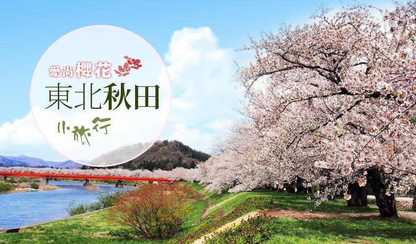 東北愛尚櫻花