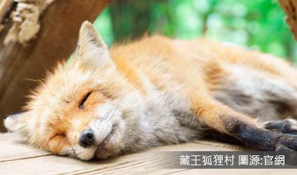 藏王狐狸村