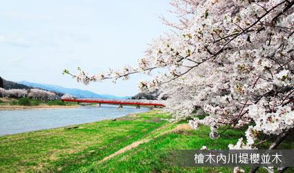 檜木內川堤櫻並木