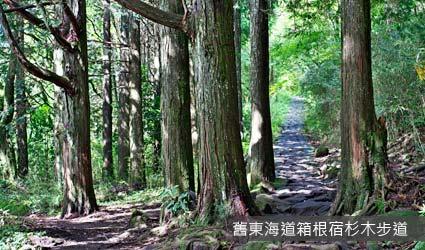 舊東海道箱根宿杉木步道