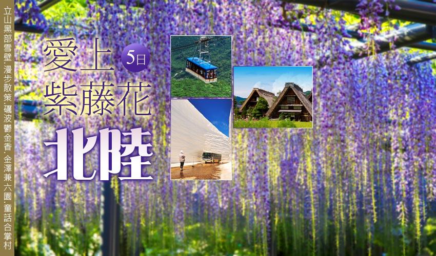 愛上紫藤花北陸