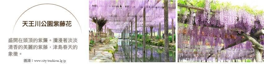 天王川公園紫藤花
