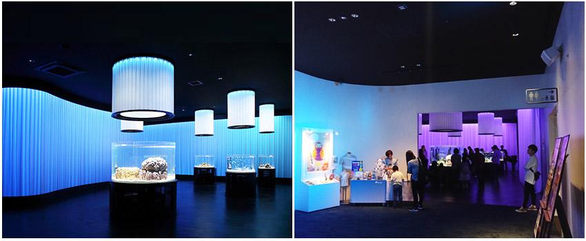 水美水族館世界-一樓(接觸顏色)