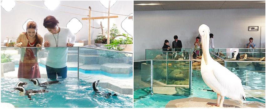 水美水族館世界-二樓(接觸行為)