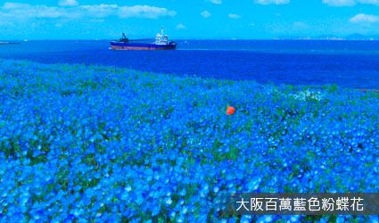 大阪舞洲海濱公園.粉蝶花祭典