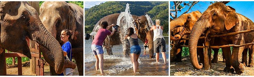 美旺大象友善營