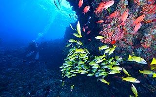 帛琉好鯊5日~大干貝城、鯊魚城、大斷層、牛奶湖、軟硬珊瑚 cover photo