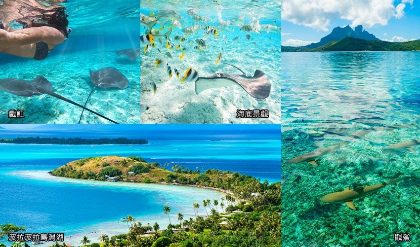 觀鯊、戲魟潟湖浮潛
