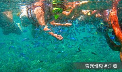 奇異珊瑚區浮潛