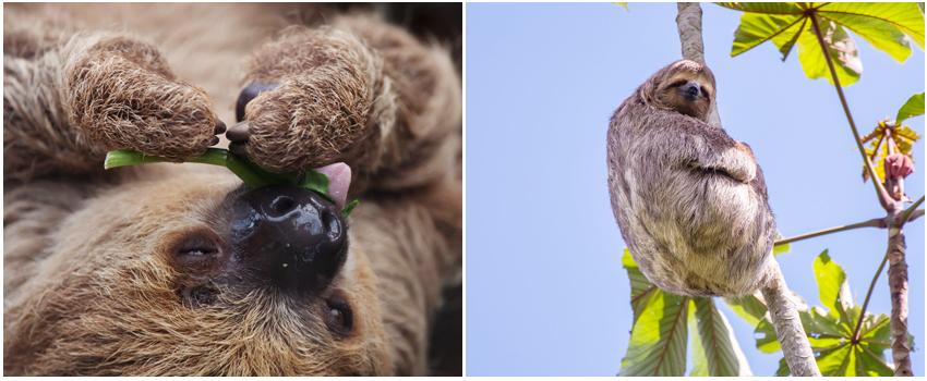名護自然動植物公園_樹懶