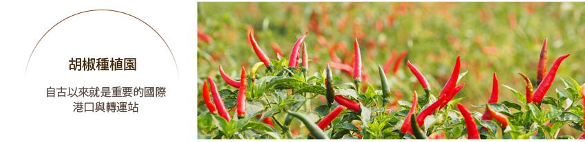 辣椒種植園