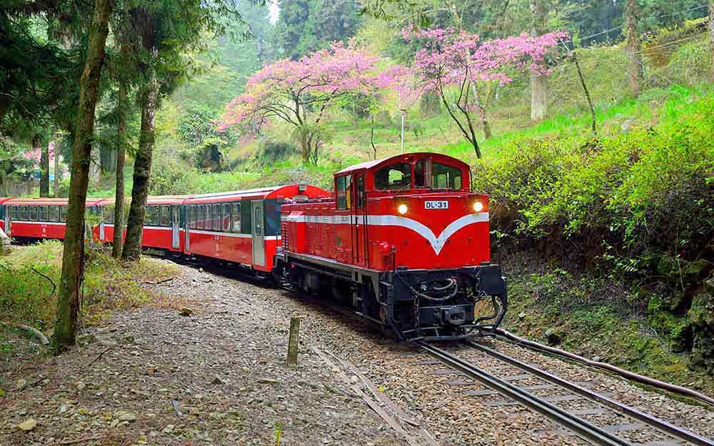 環島之星阿里山2日~ 阿里山森林火車‧櫻之道+優遊吧斯 cover photo